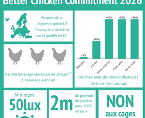 Better Chicken Commitment : vue d'ensemble